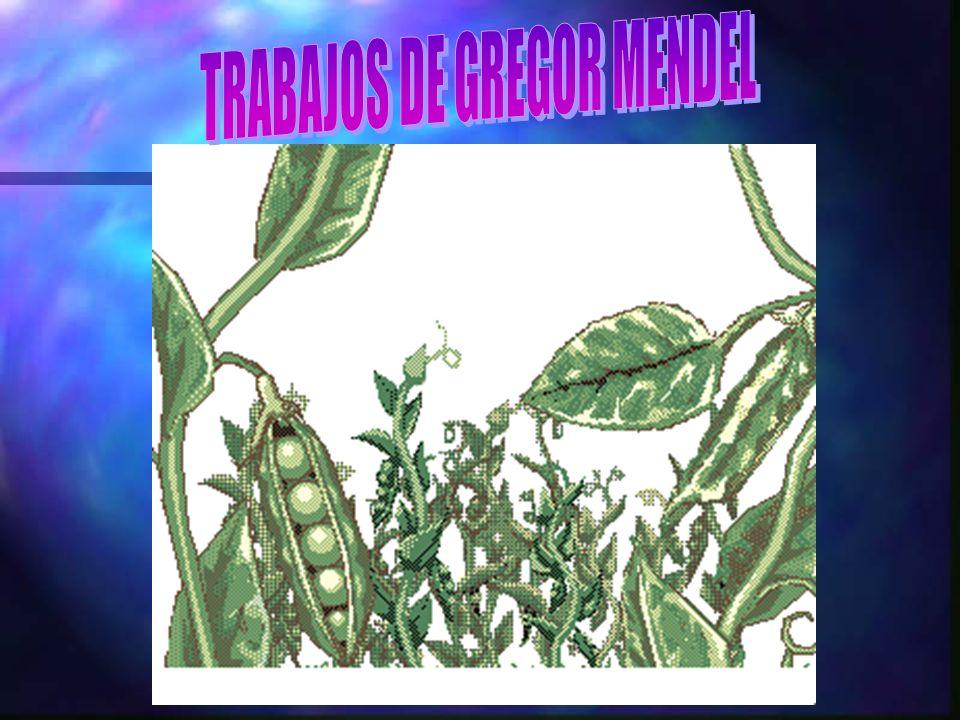 TRABAJOS DE GREGOR MENDEL