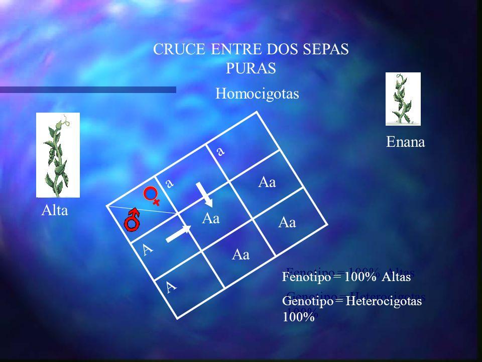CRUCE ENTRE DOS SEPAS PURAS