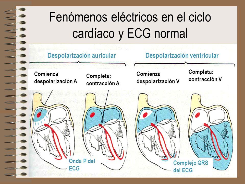 Fenómenos eléctricos en el ciclo cardíaco y ECG normal