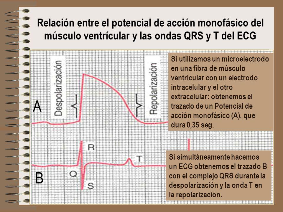 Relación entre el potencial de acción monofásico del músculo ventrícular y las ondas QRS y T del ECG