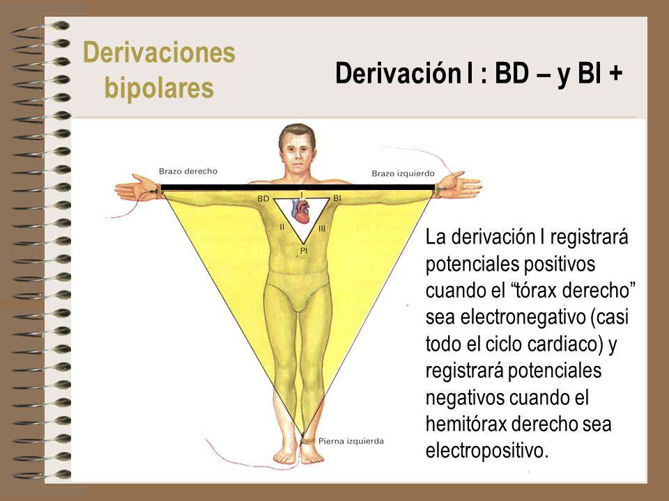 Derivaciones bipolares Derivación I : BD – y BI +