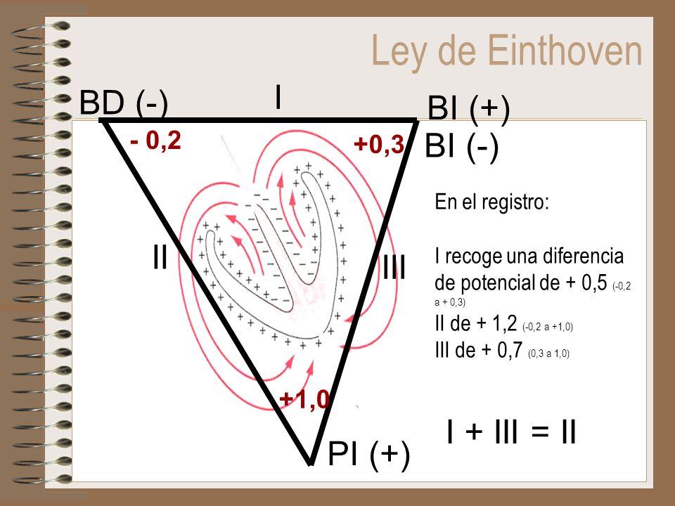 Ley de Einthoven I BD (-) BI (+) BI (-) II III I + III = II PI (+)