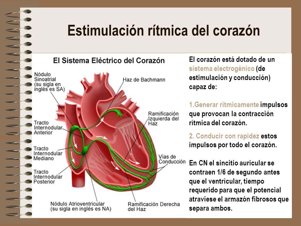 Estimulación rítmica del corazón