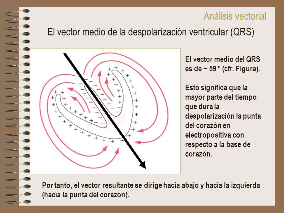 El vector medio de la despolarización ventricular (QRS)