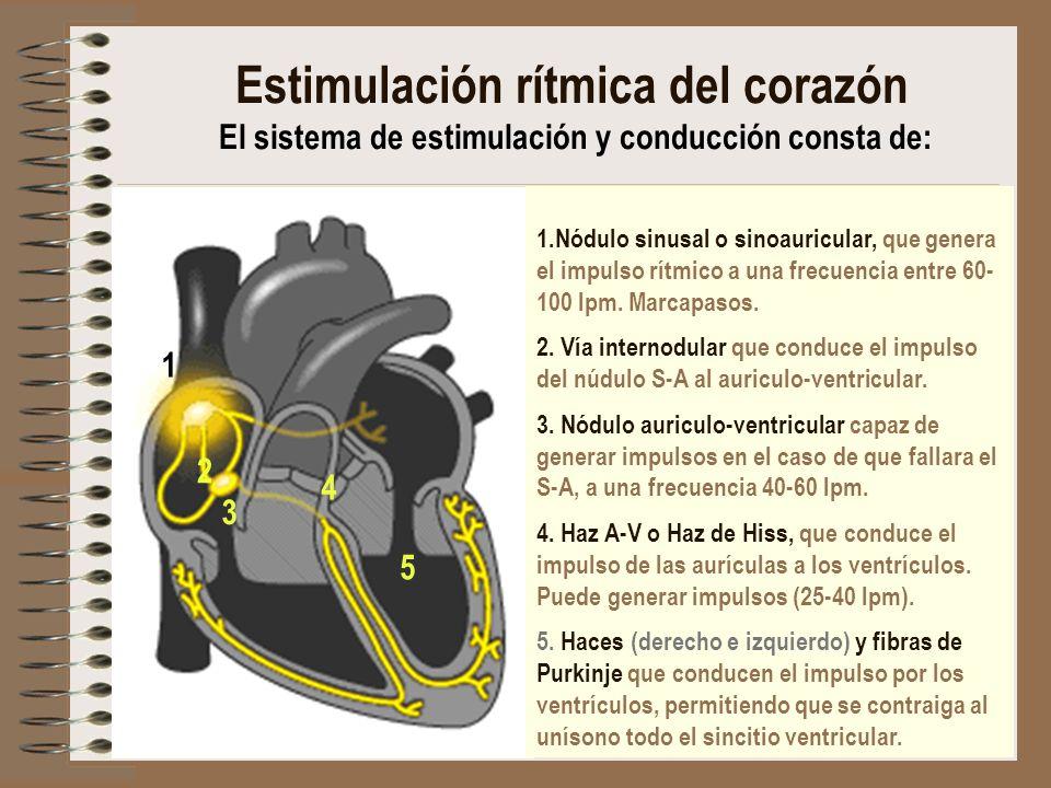 Estimulación rítmica del corazón El sistema de estimulación y conducción consta de: