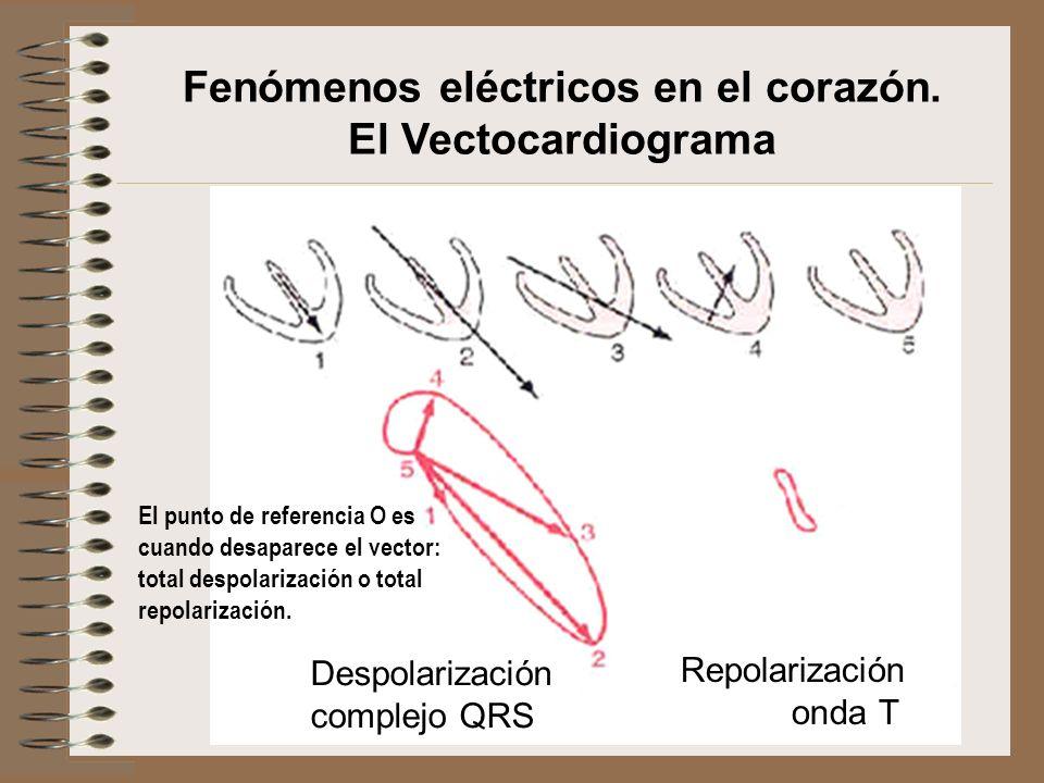 Fenómenos eléctricos en el corazón. El Vectocardiograma