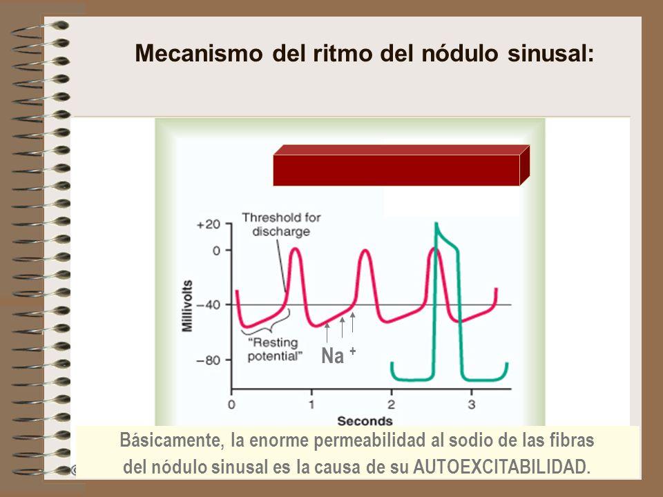 Mecanismo del ritmo del nódulo sinusal: