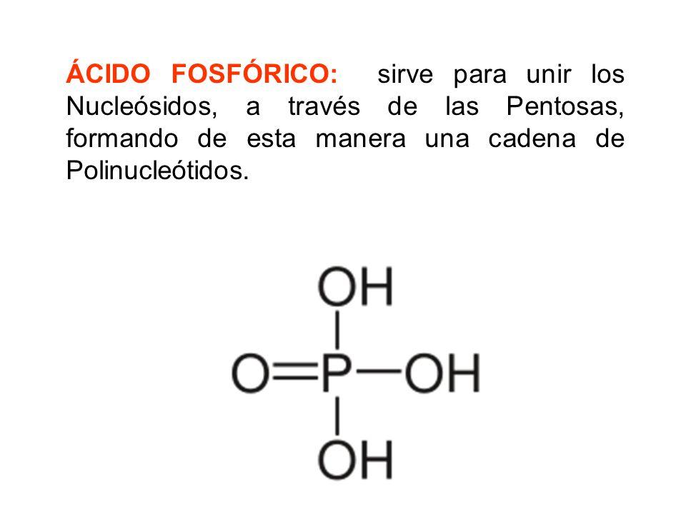 ÁCIDO FOSFÓRICO: sirve para unir los Nucleósidos, a través de las Pentosas, formando de esta manera una cadena de Polinucleótidos.