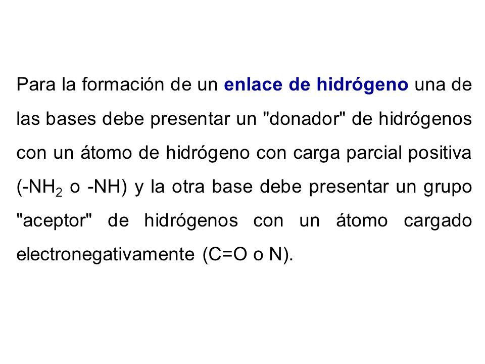 Para la formación de un enlace de hidrógeno una de las bases debe presentar un donador de hidrógenos con un átomo de hidrógeno con carga parcial positiva (-NH2 o -NH) y la otra base debe presentar un grupo aceptor de hidrógenos con un átomo cargado electronegativamente (C=O o N).