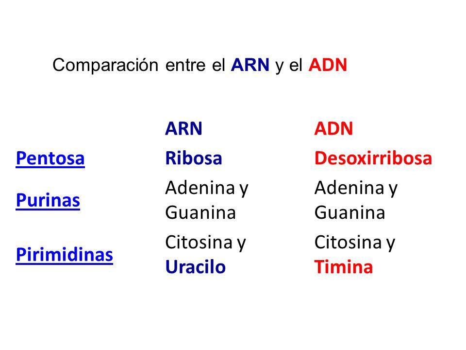 Comparación entre el ARN y el ADN