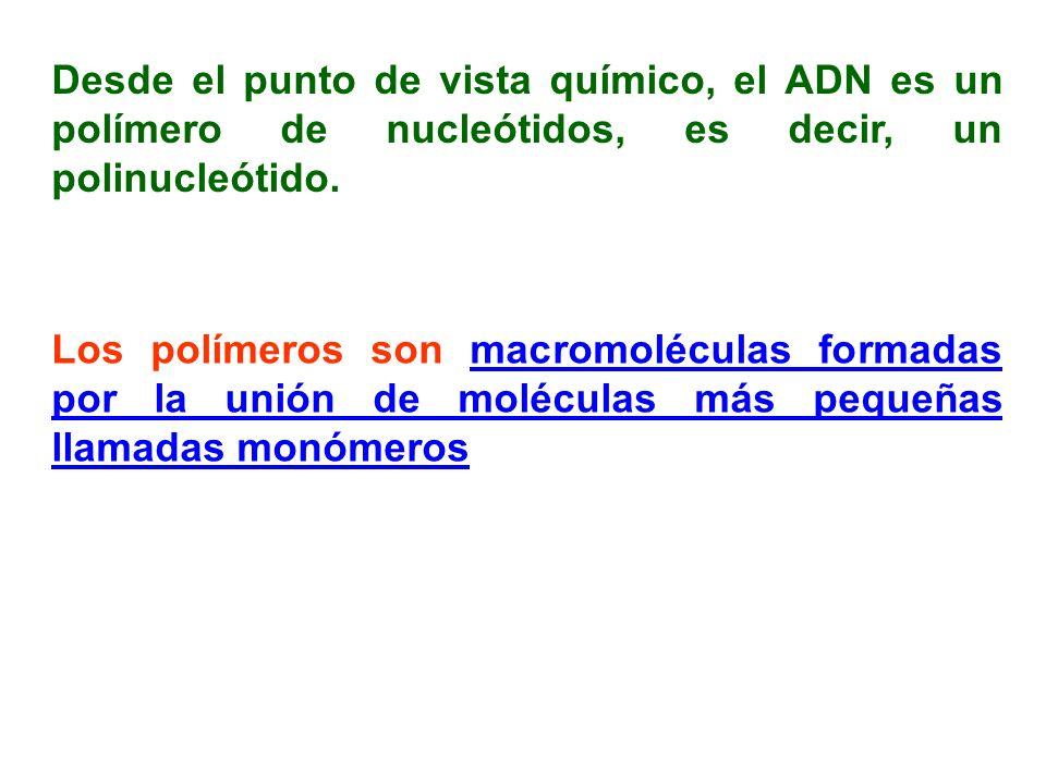 Desde el punto de vista químico, el ADN es un polímero de nucleótidos, es decir, un polinucleótido.