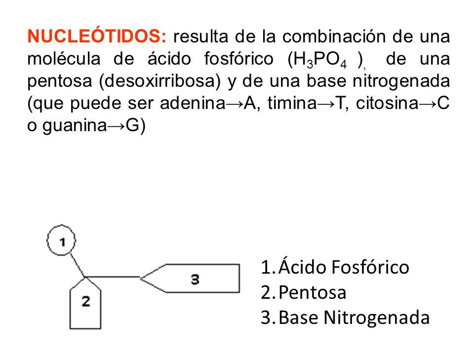 Ácido Fosfórico Pentosa Base Nitrogenada