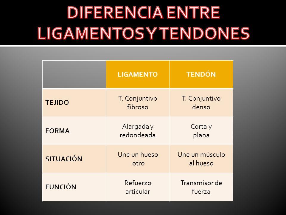 DIFERENCIA ENTRE LIGAMENTOS Y TENDONES