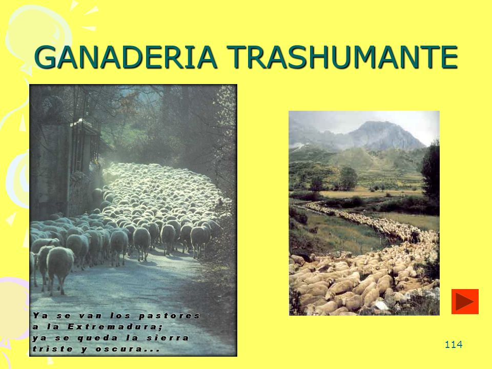 GANADERIA TRASHUMANTE