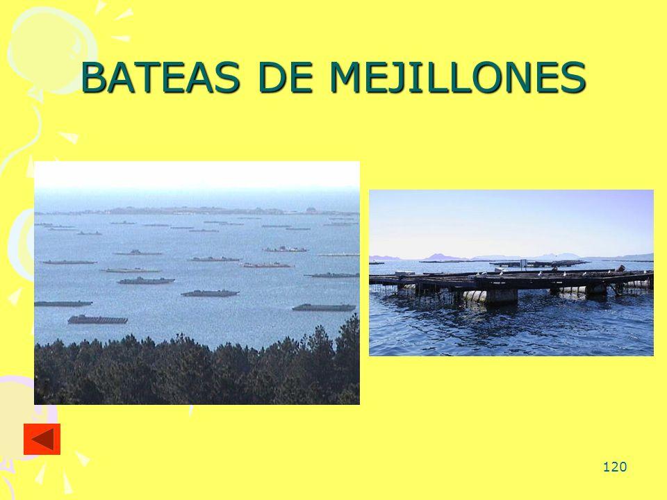 BATEAS DE MEJILLONES