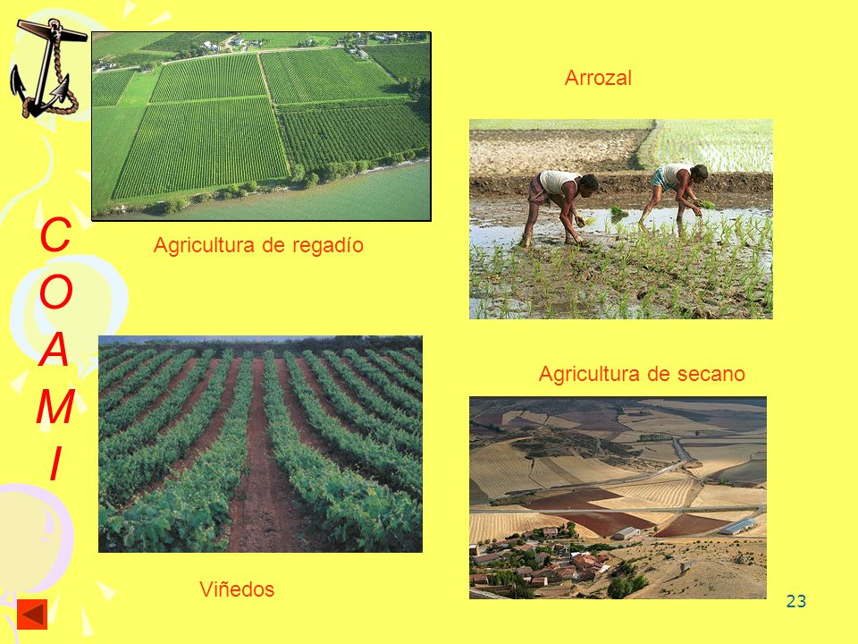 Arrozal C O A M I Agricultura de regadío Agricultura de secano Viñedos