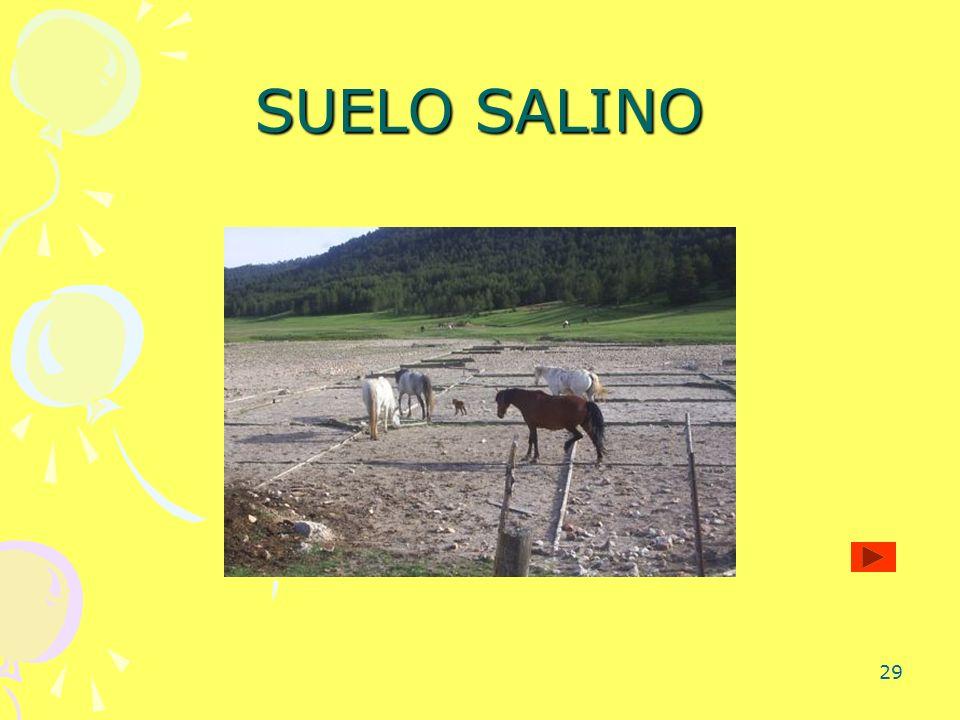 SUELO SALINO