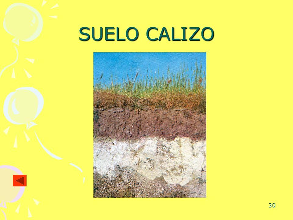 SUELO CALIZO