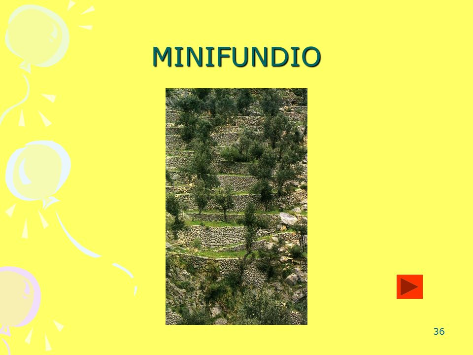 MINIFUNDIO