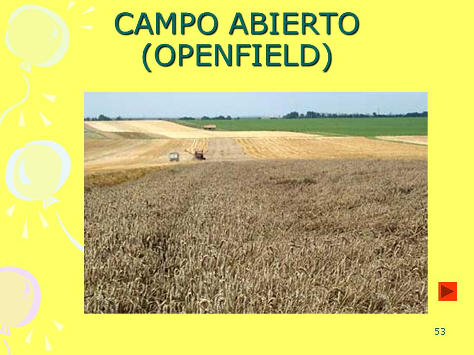 CAMPO ABIERTO (OPENFIELD)
