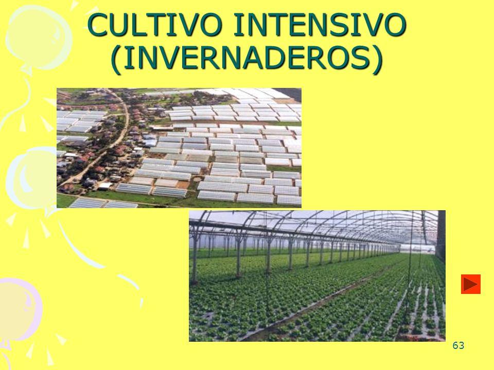 CULTIVO INTENSIVO (INVERNADEROS)