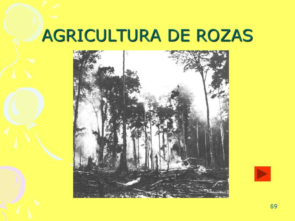 AGRICULTURA DE ROZAS