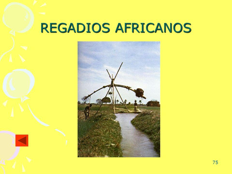 REGADIOS AFRICANOS