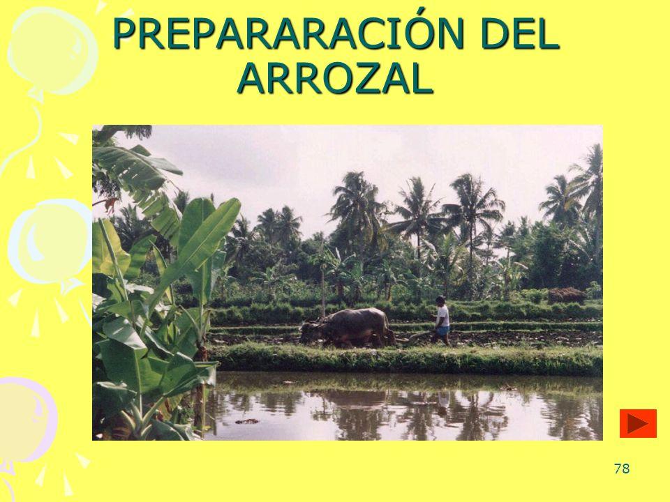 PREPARARACIÓN DEL ARROZAL