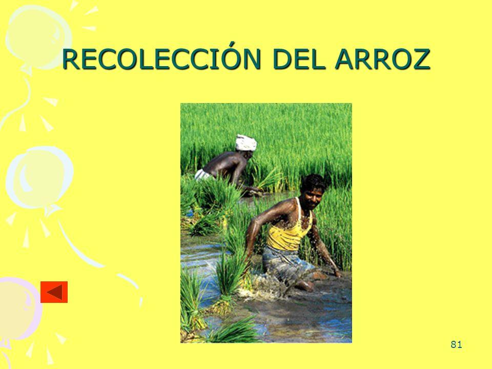 RECOLECCIÓN DEL ARROZ
