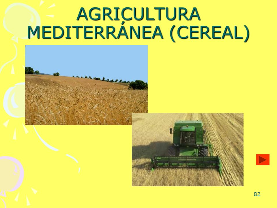 AGRICULTURA MEDITERRÁNEA (CEREAL)