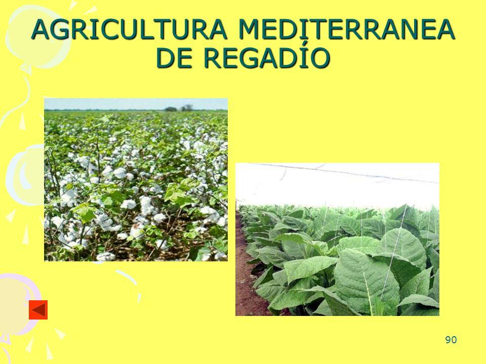 AGRICULTURA MEDITERRANEA DE REGADÍO