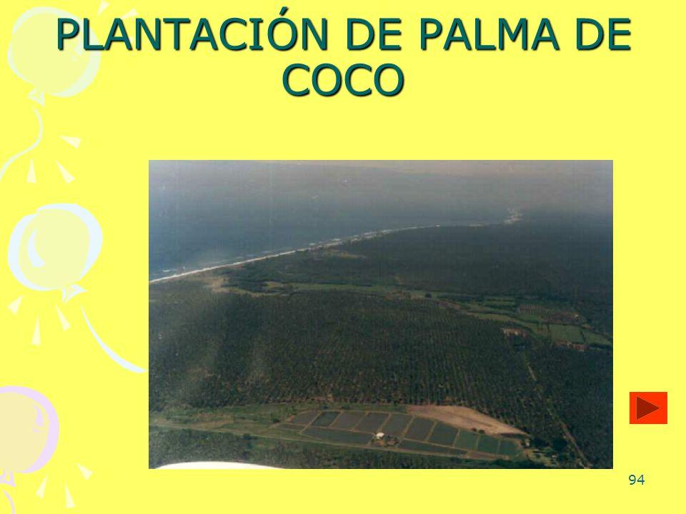 PLANTACIÓN DE PALMA DE COCO