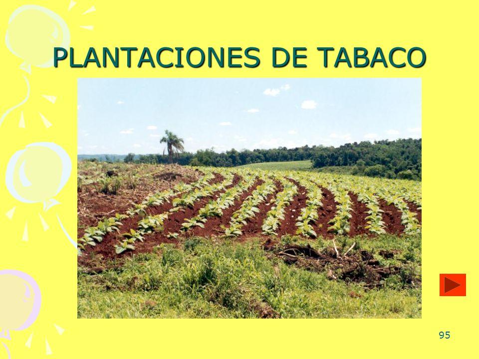 PLANTACIONES DE TABACO