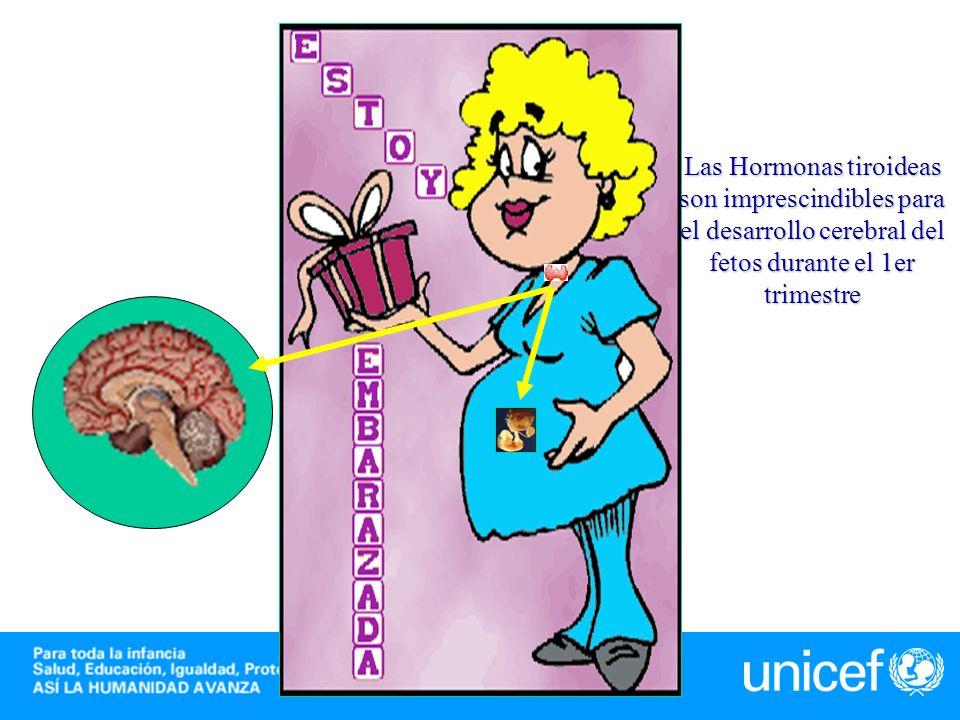 Las Hormonas tiroideas son imprescindibles para el desarrollo cerebral del fetos durante el 1er trimestre