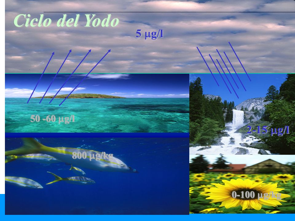 Ciclo del Yodo 5 g/l 50 -60 g/l 2-15 g/l 800 g/kg 0-100 g/kg