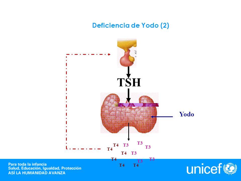 Deficiencia de Yodo (2) TSH Yodo T3 T4 T3 T3 T4 T4 T3 T4 T3 T3 T4 T4