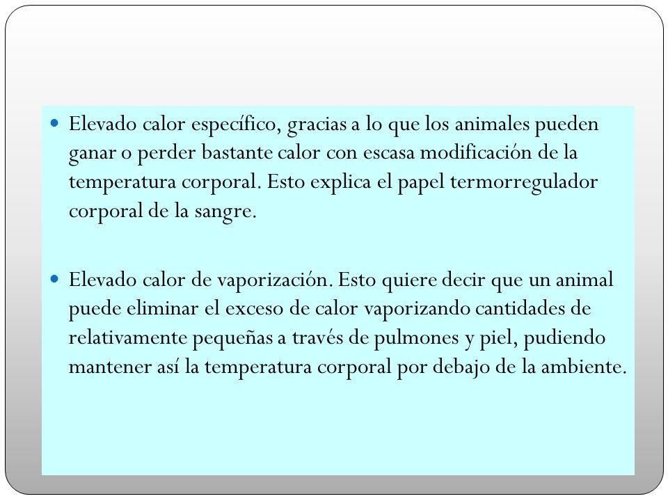 Elevado calor específico, gracias a lo que los animales pueden ganar o perder bastante calor con escasa modificación de la temperatura corporal. Esto explica el papel termorregulador corporal de la sangre.