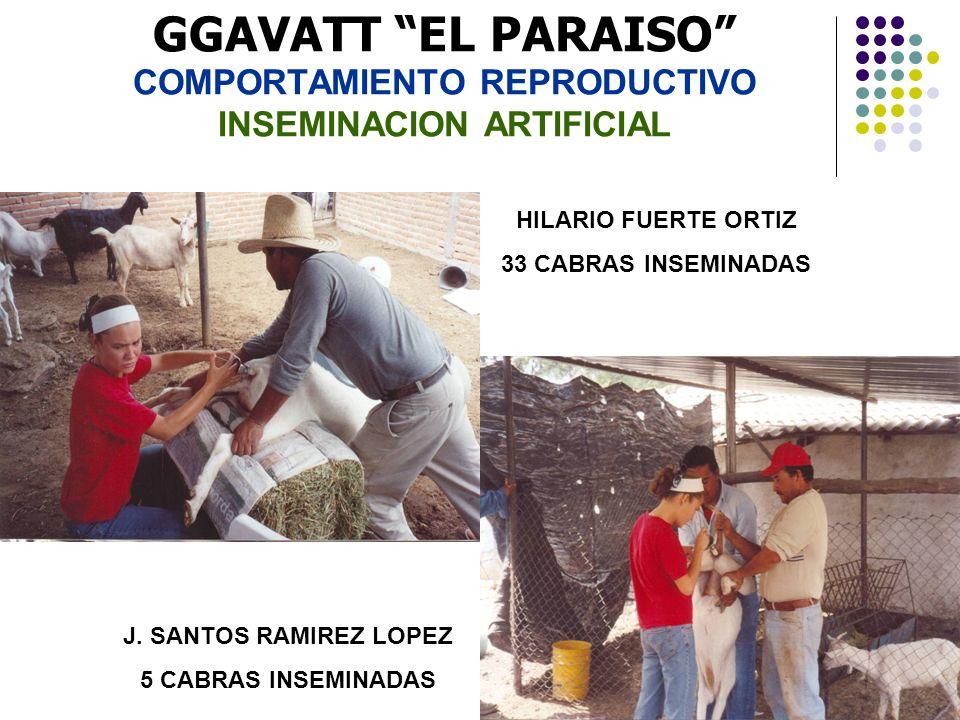 GGAVATT EL PARAISO COMPORTAMIENTO REPRODUCTIVO INSEMINACION ARTIFICIAL
