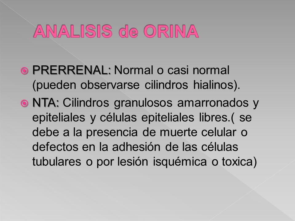ANALISIS de ORINA PRERRENAL: Normal o casi normal (pueden observarse cilindros hialinos).