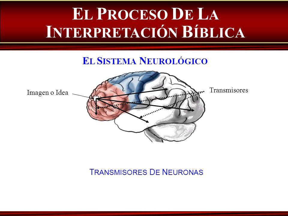 EL PROCESO DE LA INTERPRETACIÓN BÍBLICA EL SISTEMA NEUROLÓGICO