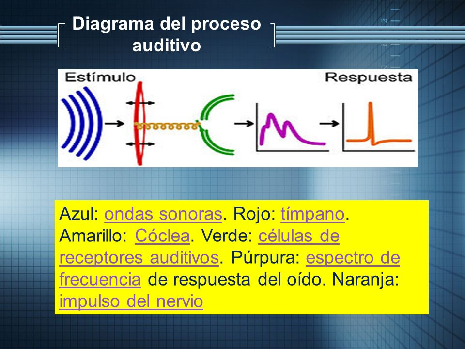 Diagrama del proceso auditivo