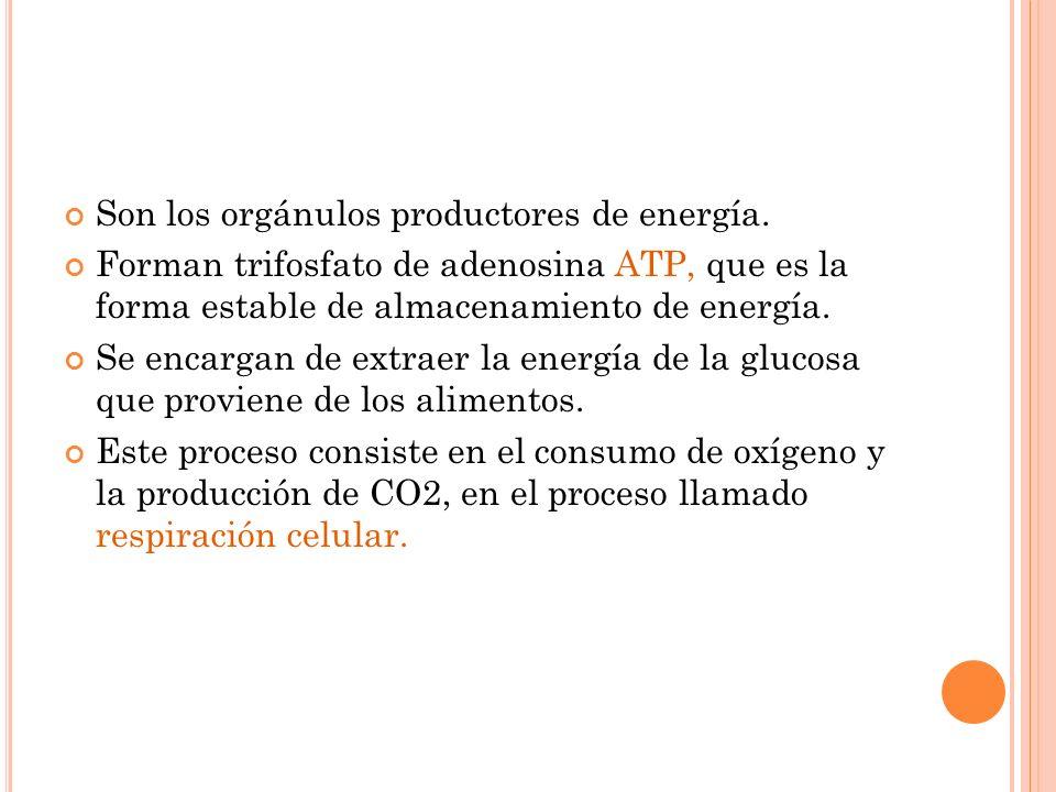 Son los orgánulos productores de energía.