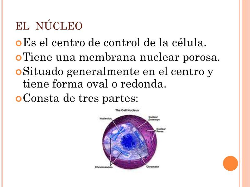 Es el centro de control de la célula.