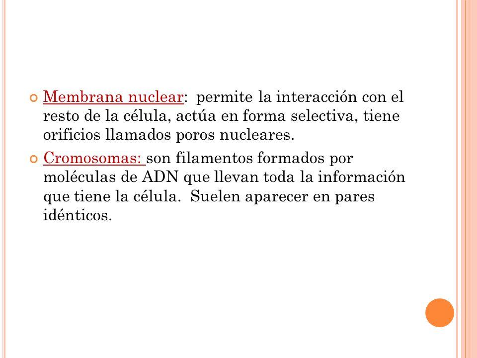 Membrana nuclear: permite la interacción con el resto de la célula, actúa en forma selectiva, tiene orificios llamados poros nucleares.