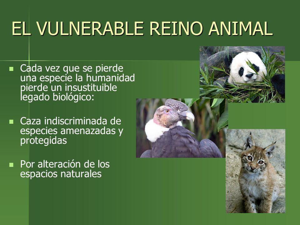 EL VULNERABLE REINO ANIMAL