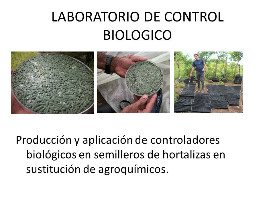 LABORATORIO DE CONTROL BIOLOGICO