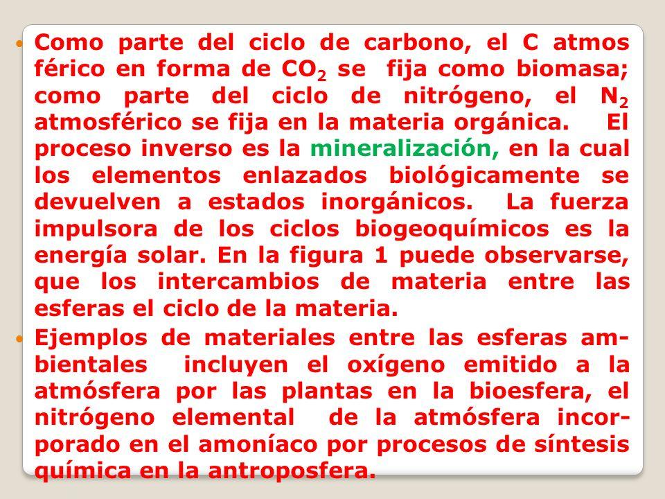 Como parte del ciclo de carbono, el C atmos férico en forma de CO2 se fija como biomasa; como parte del ciclo de nitrógeno, el N2 atmosférico se fija en la materia orgánica. El proceso inverso es la mineralización, en la cual los elementos enlazados biológicamente se devuelven a estados inorgánicos. La fuerza impulsora de los ciclos biogeoquímicos es la energía solar. En la figura 1 puede observarse, que los intercambios de materia entre las esferas el ciclo de la materia.