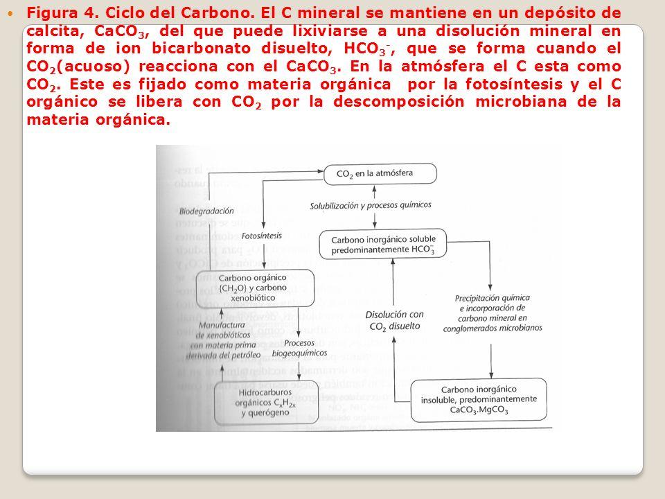 Figura 4. Ciclo del Carbono