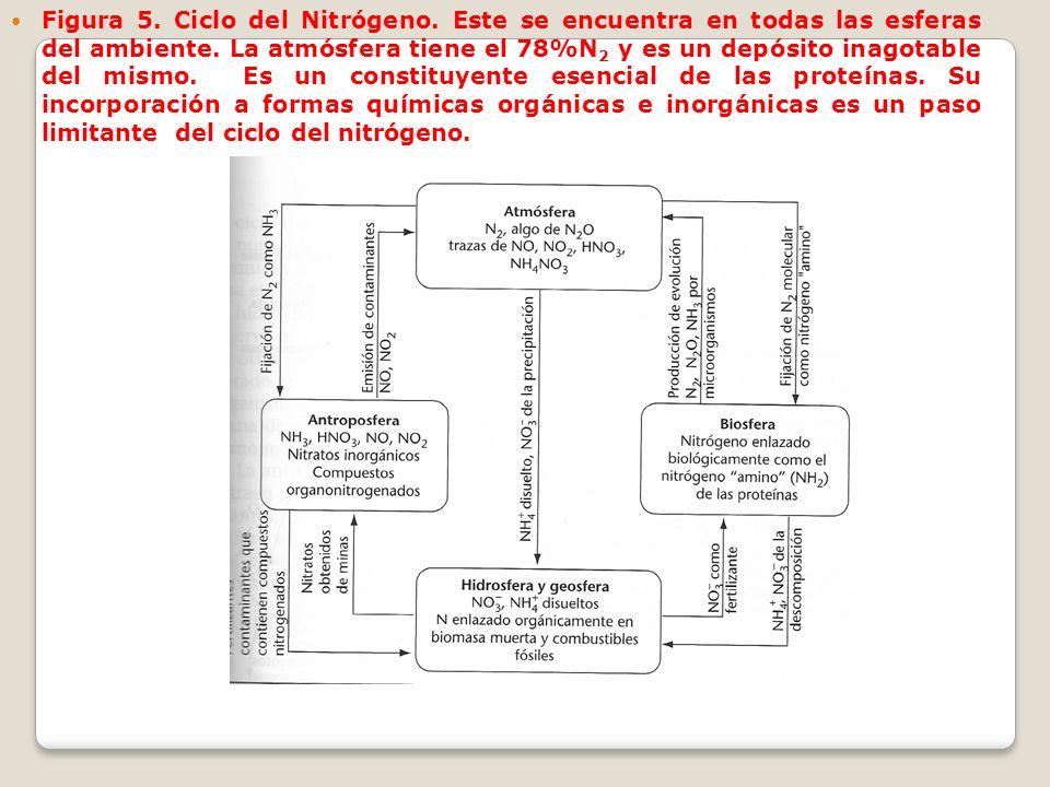 Figura 5. Ciclo del Nitrógeno