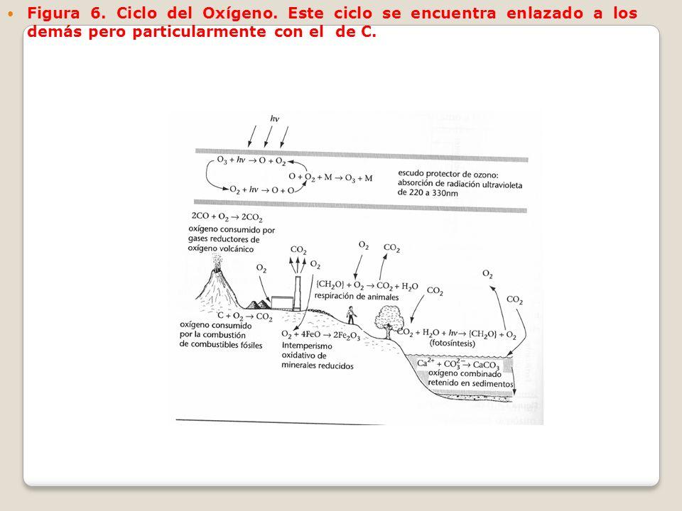 Figura 6. Ciclo del Oxígeno